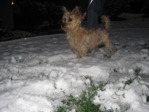Junie knocked over my snowman.