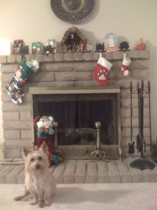 "Waiting for ""Santa Paws""."