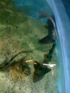 The Museum's life aquatic.