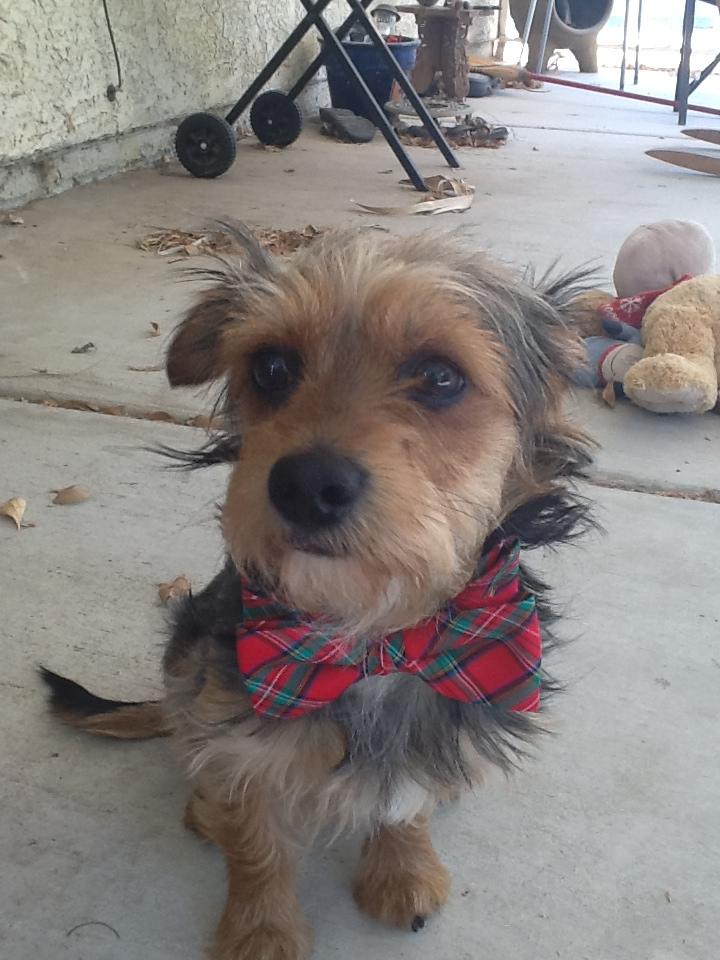 I wear bow ties now.  Bow ties are cool.