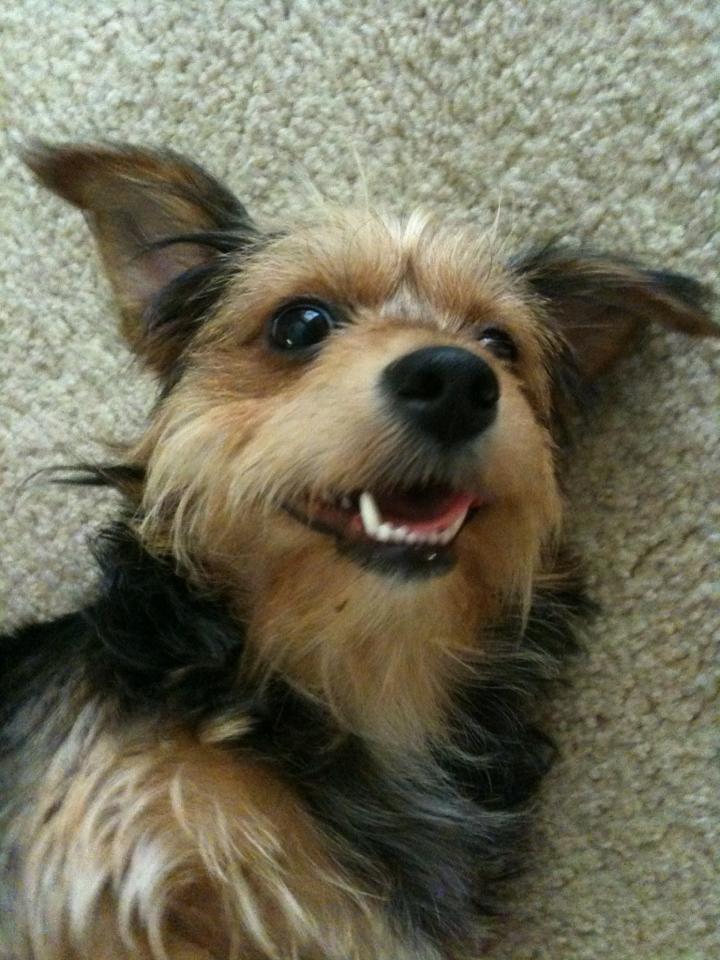 World's Happiest Dog.