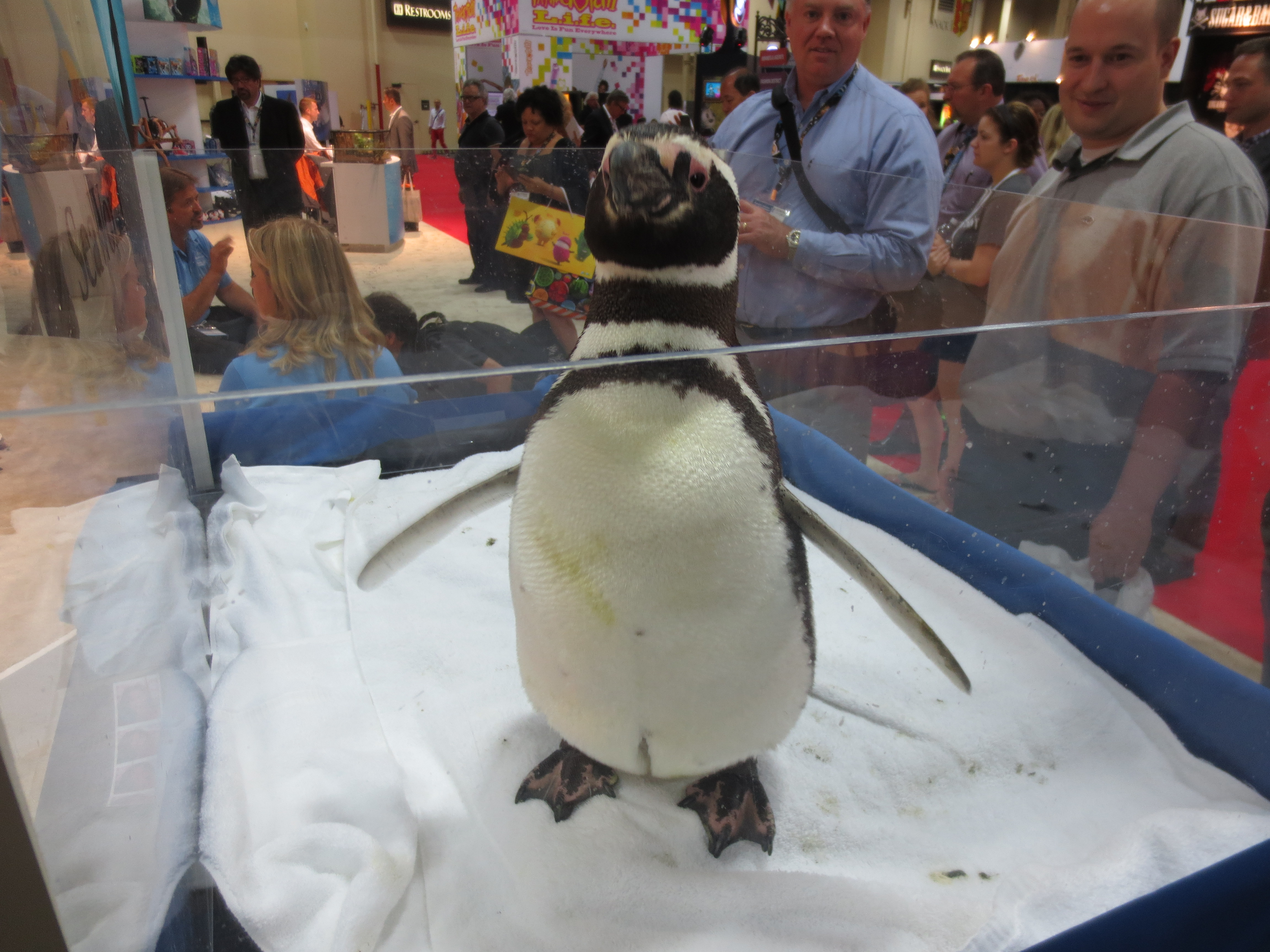 It's too damn hot for a penguin in here!